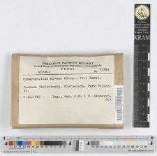Camarophyllus niveus (Scop.: Fr.) Karst.