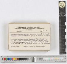Handkea excipuliformis (Scop.: Pers.) Kreisel