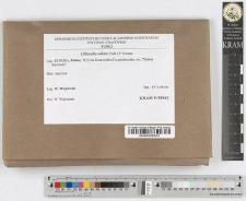 Clitocybe rivulosa (Pers.) P. Kumm.