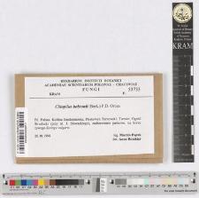 Clitopilus hobsonii (Berk.) P. D. Orton