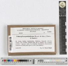 Colacogloea peniophorae (Bourd. & Galz.) Oberw. & Bandoni