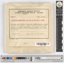 Collybia maculata /A. et S. ex Fr./ Quel