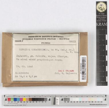 Coprinus comatus (Müll. in Fl. Dan.: Fr.) S. F. Gray