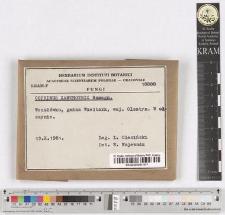Coprinus xanthotrix Romagn.