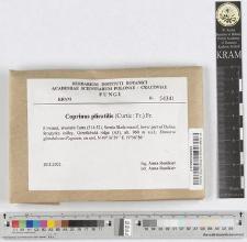 Coprinus plicatilis (Curtis: Fr.) Fr.