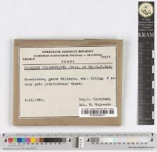 Coprinus disseminatus /Pers. ex Fr./ S.F. Gray