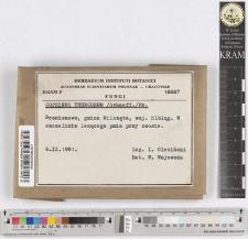 Coprinus truncorum /Schaeff./Fr.