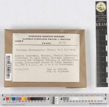Coprinus disseminatus (Pers.: Fr.) S.F.Gray