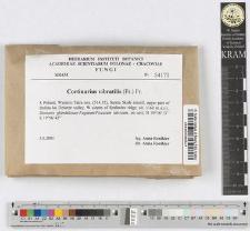 Cortinarius vibratilis (Fr.) Fr.