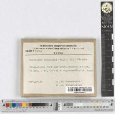 Dermocybe sanguinea (Wulf.: Fr.) Wünsche
