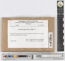 Cortinarius salor Fr.
