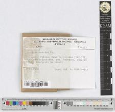 Agaricus semotus Fr.