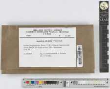 Agaricus silvicola (Vitt.) Peck
