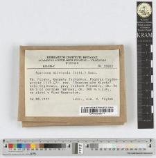 Agaricus silvicola (Vitt.) Sacc.