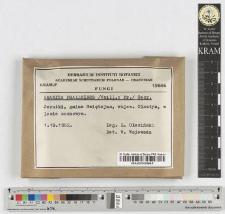 Amanita phalloides /Vaill.: Fr./ Secr.