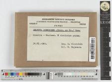 Amanita rubescens /Pers. ex Fr./ Gray
