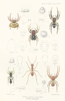 On some new and interesting Exotic Spiders collected by Messrs. G. A. K. Marshall and R. Shelford