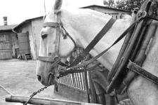 Horse collar, bridle