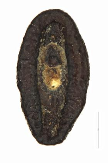 Plantago indica L.