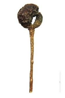 Galium mollugo L.