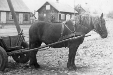 Horse team with a double shaft and a breast harness