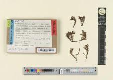 Cochlearidium aymaranum Ochyra & Mahu