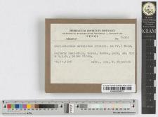 Amylostereum aerolatum (Chaill. in Fr.) Boid.