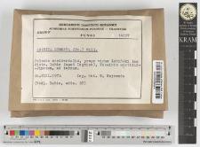 Amanita gemmata (Fr.) Gill.