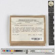 Boletus reticulatus Schaeff.