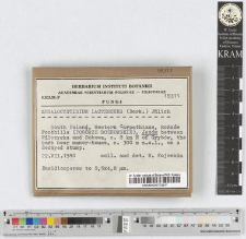 Megalocystidium lactescens (Berk.) Jülich