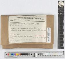 Ganoderma adspersum (S. Schulz.) Donk