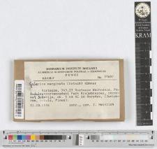 Galerina marginata (Batsch) Kühner