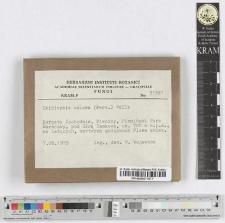 Exidiopsis calcea (Pers.) Wells