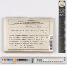 Galerina pumila (Pers. ex Fr.) M. Lange ex Sing.