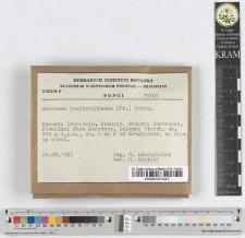 Entyloma porphyrophaeum (Fr.) Karst.