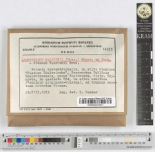 Dacryobolus karstenii /Bres./ Oberw. ex Parm.