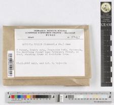 Datronia mollis (Sommerf.: Fr.) Donk