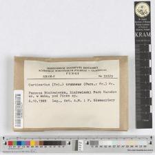 Cortinarius brunneus (Pers.: Fr.) Fr.