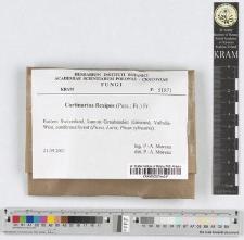 Cortinarius flexipes (Pers.:Fr.) Fr.
