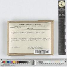 Crepidotus mollis /Schaeff.: Fr./ Kumm.