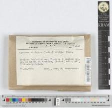 Cyathus striatus (Huds.) Willd.: Pers.