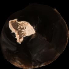 Krzemień czekoladowy : dokumentacja 3D