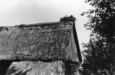 A gable structure in the log barn