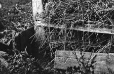 A barn - a fragment