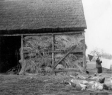 A half-timbered structure of a barn