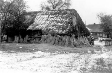 A hipped straw roof on the barn