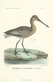 Description d'un oiseau nouveau