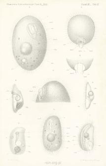 Studyja nad wymoczkami : O kilku wymoczkach z rzędu Holotricha, spotykanych w nalewkach siana