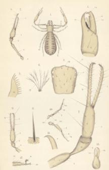 Pseudoscorpiones faunae hungaricae : A Magyar fauna álskorpiói