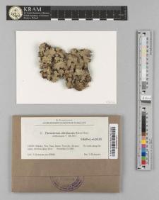 Parmotrema ultralucens (Krog) Hale